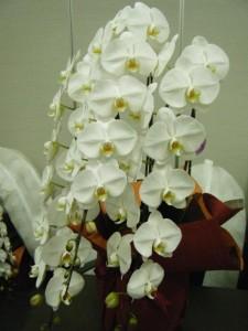 開店開業お祝い花