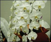 開店・開業お祝い花